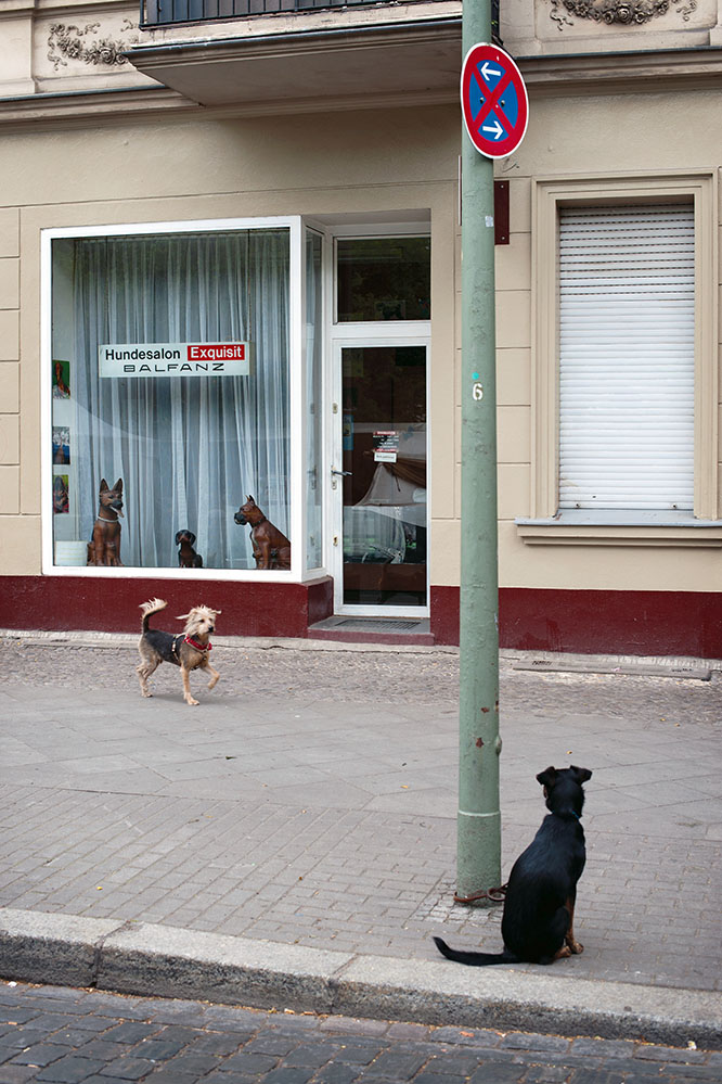 dogs funny streetphoto Berlin